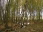 Humedal del Juncar